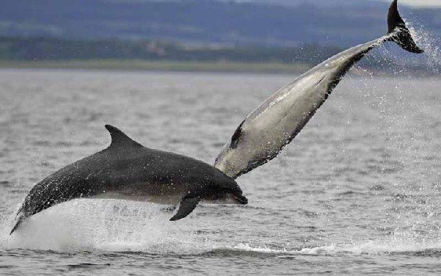 Les dauphins et les orques Btu2y0jb