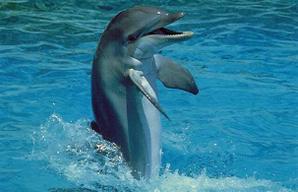 Les dauphins et les orques Y8nf11bx